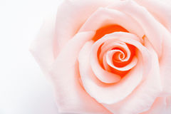 Background with beautiful pink rose Stock Photos