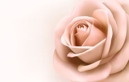 Background with beautiful pink rose. Stock Photos