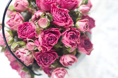 Background of beautiful pink small roses Royalty Free Stock Photo
