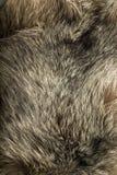 Background - beautiful polar Fox fur Stock Images