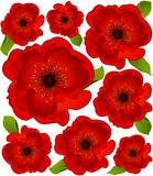 Background with beautiful poppy Stock Photography