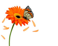 Background with beautiful red flower with butterfly. Vector Stock Photo