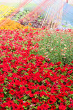 Background beautiful red flowers Stock Photo