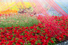 Background beautiful red flowers Stock Photography