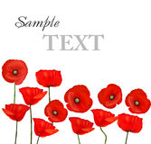 Background with beautiful red poppies. Vector Royalty Free Stock Photo