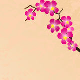 Background with beautiful sacura spring cherry Stock Photo