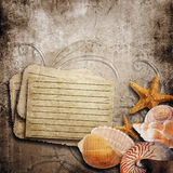 background with beautiful sea shells Stock Images