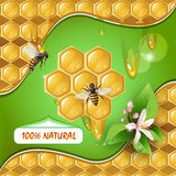 Background with bees and honeycomb. Background with bees, honeycomb and flower vector illustration
