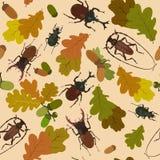 Background with beetles, acorns on oak leaves. Vector illustration. Seamless pattern with beetles, acorns, oak leaves Stock Photos