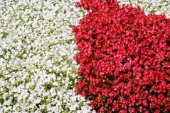 Background begonia flowers Stock Photos