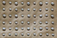 Background of beige leather with large and shiny rivets made of steel stock image
