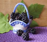Background with berries - blackberries unripe. Rubus fruticosus stock photography