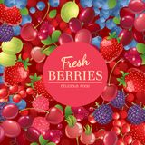 Background with berries Royalty Free Stock Image