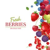 Background with berries royalty free illustration