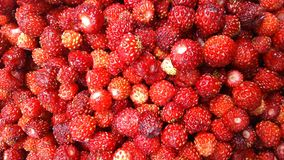 Background of berries of wild strawberry. Still life in rural style royalty free stock image