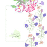 Background with  bindweed and flowers-05 Stock Photo