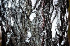 Background birch bark texture Stock Photos