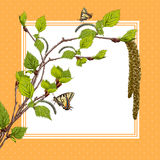 Background with birch branches and butterflies. Royalty Free Stock Image