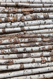 Background of the birch logs Stock Images