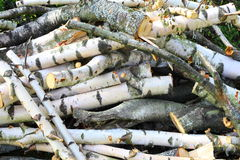 Background birch wood Royalty Free Stock Image
