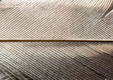 Background  of a bird feather Stock Images