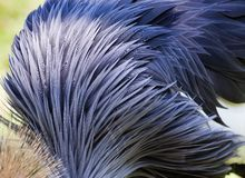 Background of bird's feathers Royalty Free Stock Image