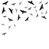 Background with birds silhouettes Stock Images