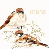 Background with birds on white Stock Photos