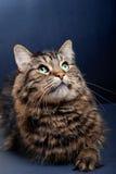 background black cat cute 免版税库存照片