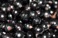 Background black currant Royalty Free Stock Photo