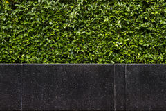 Background of black granite stone bench in front of hedgerow Stock Photo