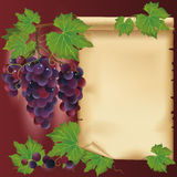 Background with black grapes and old paper. Place for your text, decorated with grape leaves and grapevine Royalty Free Stock Photos