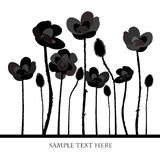 Background with black poppies Royalty Free Stock Photography