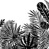 Background with Black silhouettes of tropical plants and leaves . Vector botanical illustration, elements for design. Background with Black silhouettes of Royalty Free Illustration