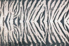 Background of black striped animal fur print Royalty Free Stock Images