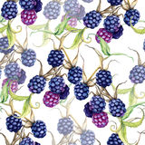 Background of a blackberry berries on a branch. Seamless pattern Stock Photos