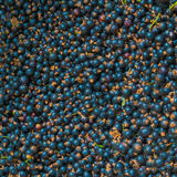 Background of blackcurrant. Royalty Free Stock Photos