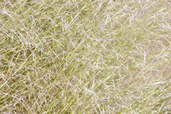 Background of blades of grass in daylight. Diagonal Royalty Free Stock Image