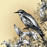 Background with blooming lilies and a sitting bird Royalty Free Stock Images