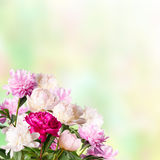 Background with blooming peonies Royalty Free Stock Photo