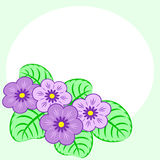 Primroses background Stock Photo