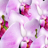 Background with blossom orchids Stock Image