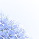 Background with blue bluebell flowers. Vector illustration. Royalty Free Stock Photos