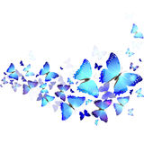 Background of blue butterflies. Background of beautiful blue butterflies stock illustration