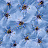 background blue floral Άσπρο μεγάλο κεράσι λουλουδιών floral κολάζ convolvulus σύνθεσης ανασκόπησης λευκό τουλιπών λουλουδιών Στοκ φωτογραφία με δικαίωμα ελεύθερης χρήσης