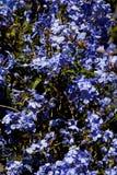 background blue floral Στοκ Εικόνες