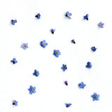 Background with blue flowers Stock Image
