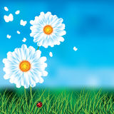 Background with blue skies and daisies. Stock Photo