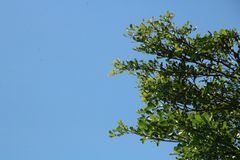 Background of sky and branch of tree Stock Photos