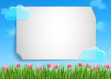 Background with with blue sky, clouds, green grass end pink flowers tulips Royalty Free Stock Images